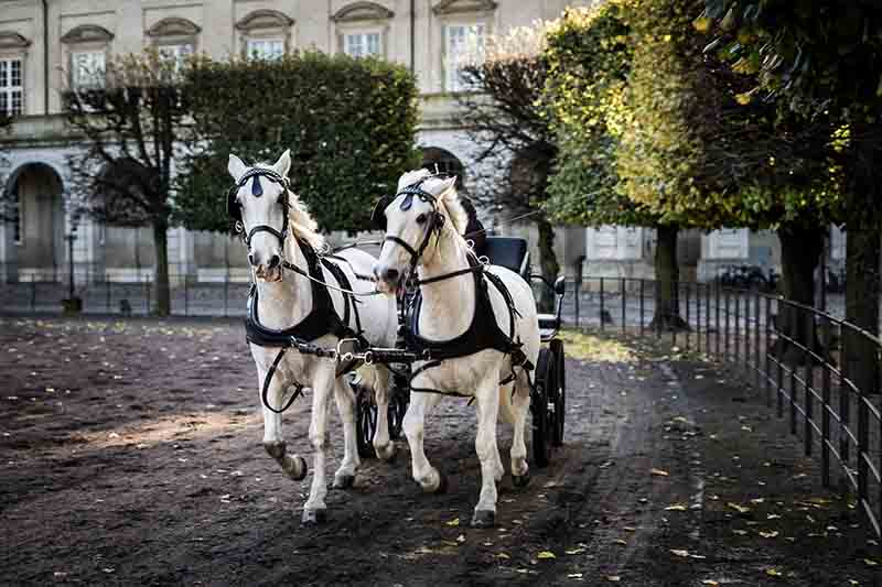 old chariot pulled by two horses