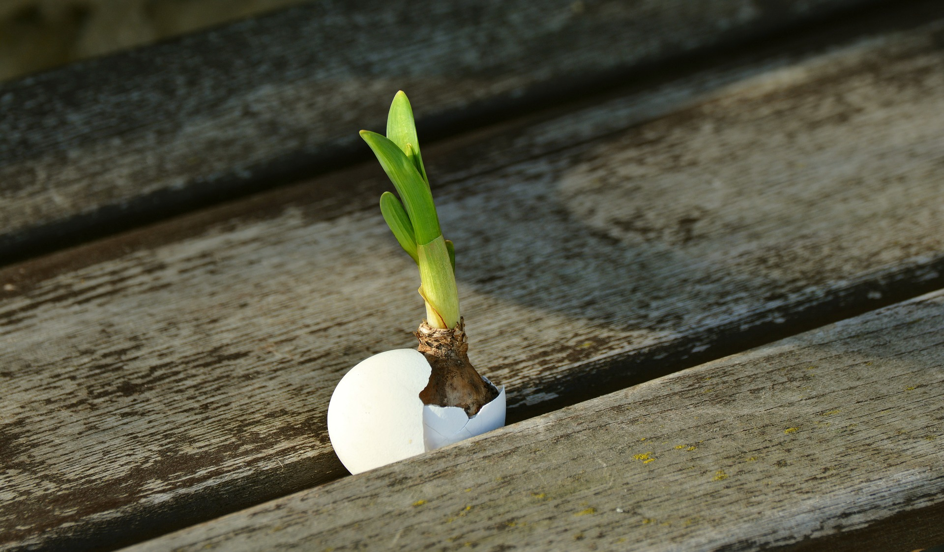 a small sprout in between wodden planks